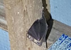 Bats have been rehomed at Westleigh Quarry in Devon